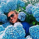 KINGDUO 20Stk Hortensie Blume Samen Vanille Erdbeere Samen Für Im Freien Zu Hause Pflanzung Bonsai-Blau