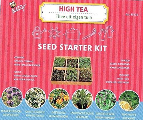 HIGH Tea Herbs Growing KIT - 6 HERB Varieties - Soil Included/Buzzy 85172