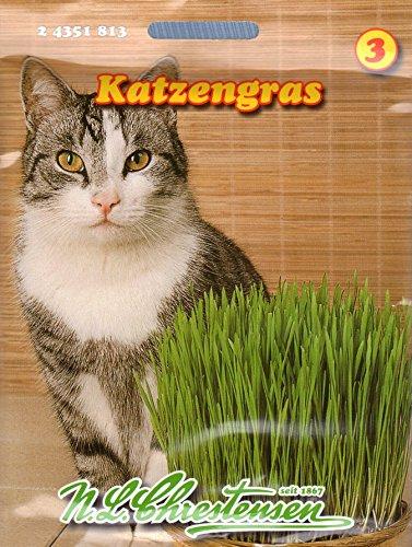 Katzengras Saatmischung