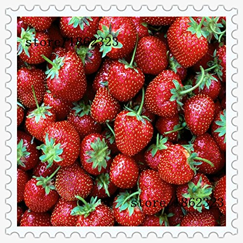2016 vente directe Plantes d'intérieur fraise Graines semences Couleur Rare Fruits Graines jardin Diy Pour 200pcs Bonsai