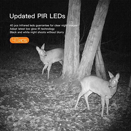 This camera comes with 40pcs black infrared LEDs that are designed to work in low light. Able to capture as far as 65ft, the camera is able to capture clear black and white photos. There is no glaring light that would chase the animals away.