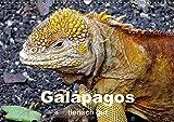 Galápagos - tierisch gut (Wandkalender 2018 DIN A3 quer): Tiere auf Galápagos (Monatskalender, 14 Seiten ) (CALVENDO Tiere) [Kalender] [Apr 01, 2017] Rudolf Blank, Dr.