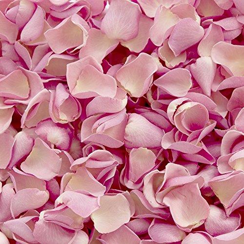 Petals and Roses Confettis de pétale de Rose biodégradable pour Mariages (Rose Tendre, 2 litres)