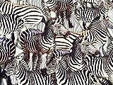 Mit Zebramuster bedruckter Jersey-Stretchstoff. aus