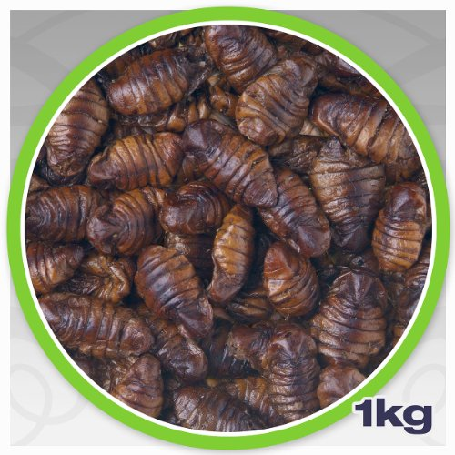 seidenraupen-getrocknet-10-kg-netto-ideal-als-z-b-koifutter-oder-fischfutter-proteinfutter-in-spitze