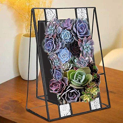 Global Brands Online Schräge Pflanzen Bonsai unregelmäßige Glas Box Frame Indoor Sukkulenten Fern Moos Blumentopf