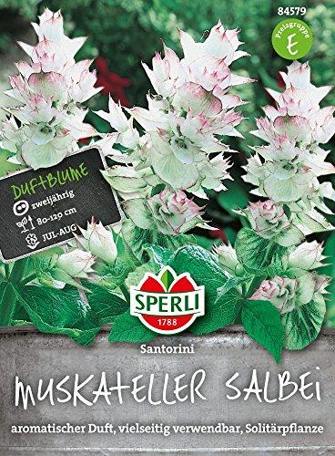 Sperli-Samen Muskateller Salbei Santorini