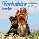 Calendrier yorkshire terrier