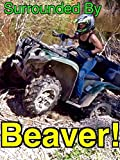 Surrounded By Beavers! - ATV Trail/Road Gone!.BEAVERS! [OV]