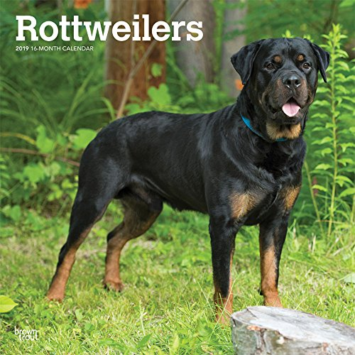 Rottweilers 2019 Square por Inc Browntrout Publishers