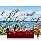 Fototapete 368x254 cm PREMIUM Wand Foto Tapete Wand Bild Papiertapete - Landschaft Tapete Meer Strand Schilf Pflanzen Himmel blau - no. 2201