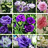 Eustoma, billige eustoma Samen, Bonsais Balkonblume, Eustoma eingetopft Samen - 100 PC / bag