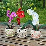 Moresave Gemischt Phalaenopsis Orchidee Samen Topfpflanzen Bonsai Blumensamen Garten Balkon 200Pcs/Set