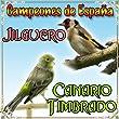 Canario Timbrado y Jilguero, Campeones de España