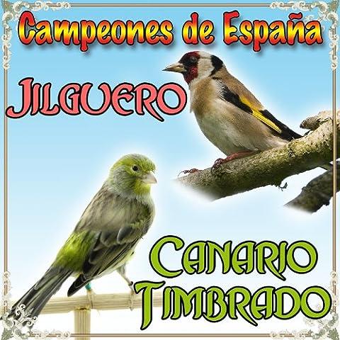 Canto de Jilgueros Campero Silvestrismo I