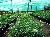 #10: Casa De Amor Shade Net 50%, 10 Meters, for Gardening