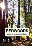 Redwoods - Faszination Mammutbäume (Wandkalender 2019 DIN A4 hoch): Zwölf atemberaubenden Naturaufnahmen der fazinierenden Mammutbäume (Monatskalender, 14 Seiten) (CALVENDO Natur)