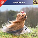 YORKSHIRE TERRIER 2019 - CALENDRIER AFFIXE (YORK)