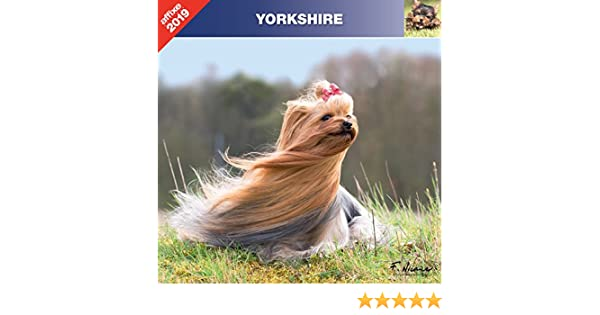 CALENDRIER MURAL AFFIXE YORK YORKSHIRE TERRIER 2020 …