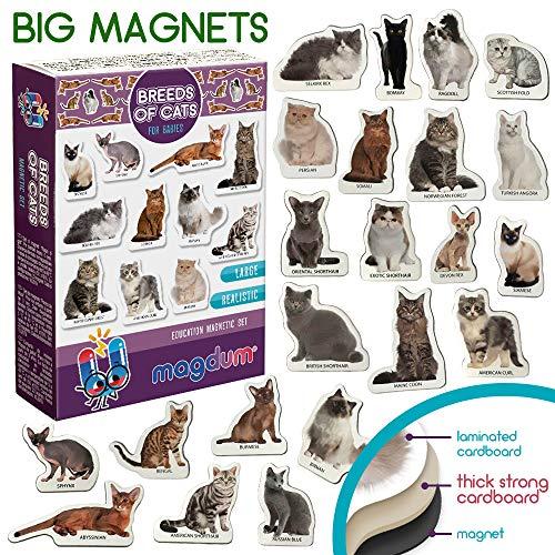 MAGDUM Imanes FOTO Razas de GATOS - Imanes de animales para la...