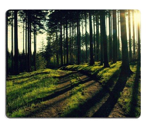 general-alta-calidad-bosque-camino-arboles-luz-del-sol-sombras-raton-almohadillas