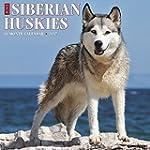 Just Siberian Huskies 2017 Calendar