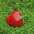 Schöne Rote Erdbeere aus Keramik Garten oder Haus Deko von Gardens2you - Du und dein Garten