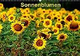 Sonnenblumen (Wandkalender 2019 DIN A2 quer): Sonnenblumen in verschiedenen Farben und Formen, wie gewachsen im Feld (Monatskalender, 14 Seiten ) (CALVENDO Natur)