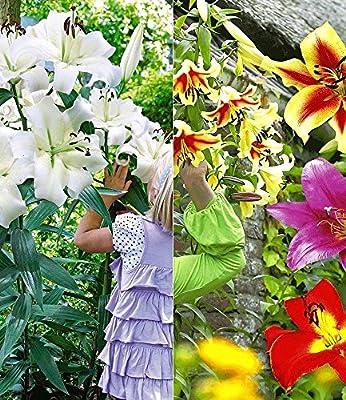 BALDUR-Garten Tree-Lily®-Kollektion 4 Farben 9 Stück Baumlilien von Baldur-Garten - Du und dein Garten