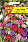 Astern, Zwergastern, Callistephus chinensis fl. pl., ca. 100 Samen