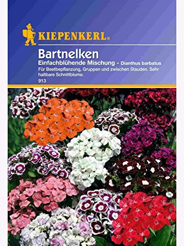 Dianthus barbatus Bartnelken einfach blühende Mischung
