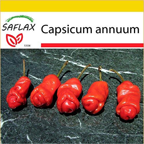 SAFLAX - Anzucht Set - Chili - Peter Peppers Penis Chili - 10 Samen - Capsicum annuum