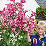 Vente chaude 200Pcs Lily Graines Lily Fleur (Non Lily Bulbes) Lilium Graines de fleurs Faint Parfum Bonsai Plante en pot pour jardin Plantes blanches...