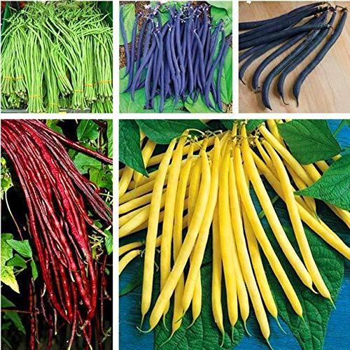 Shoopy Star 7: 30 Pcs/Paquet Bouteille Palmier graines vivaces Easy Grow Bonsaï Pots Tropical