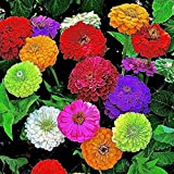 #4: Nelesa Gardening Zinnia Mix Colour Flower Seeds 20 Seeds