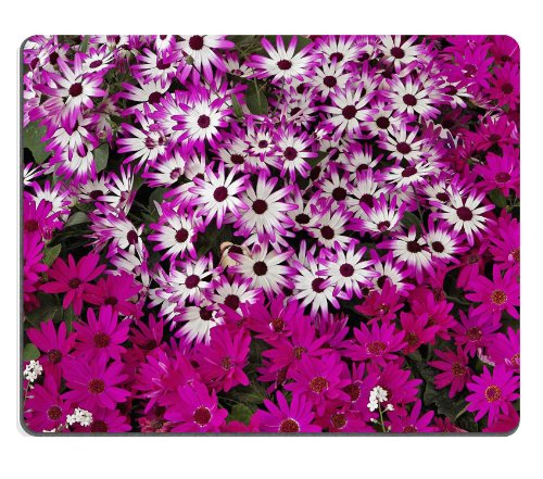 purple-white-hybrid-daisies-pure-color-mix-bunches-mouse-pads-customized-made-to-order-support-ready