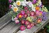 Kiepenkerl Helichrysum bracteatum (Strohblume (Strohblumen-Mischung)) 0-0cm / Portionssaatgut (Blumenzwiebeln, Sommerblüher...