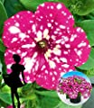 """BALDUR-Garten Hänge-Petunie """"BabyDoll®"""",3 Pflanzen von Baldur-Garten auf Du und dein Garten"""