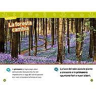 Nella-foresta-Livello-1-Ediz-a-colori