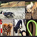#8: Pets Empire Pet Dog Walking and Training Rope Lead Leash with Shock Spring for Big Heavy Breeds Dogs 1 Piece Color May Vary