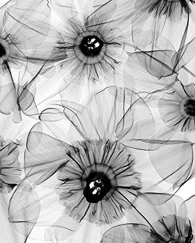 The Poster Corp Steven N. Meyers - Daffodil Mix Fine Art Print (20,32 x 25,40 cm) - Daffodil Fine Art