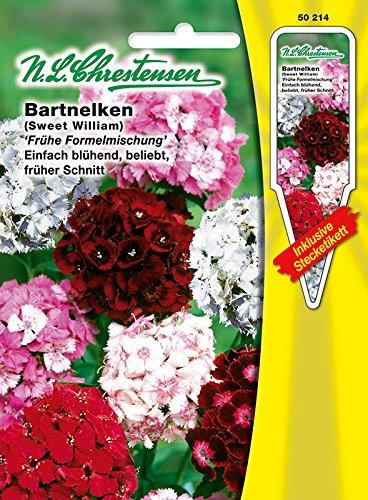 Bartnelken 'frühe Formelmischung', einfach blühend, lange haltbare Schnittblume, zweijährig, Büschelnelken ( mit Stecketiket) 'Dianthus barbatus'