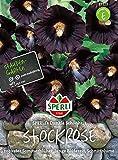 Sperli-Samen Schwarze Stockrose (Stockmalve) SPERLI's Dunkle Schönheit