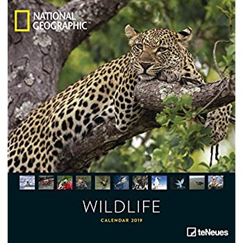 2019  Wildlife Calendar - National Geographic - Animal Calendar-  45 X 48Cm