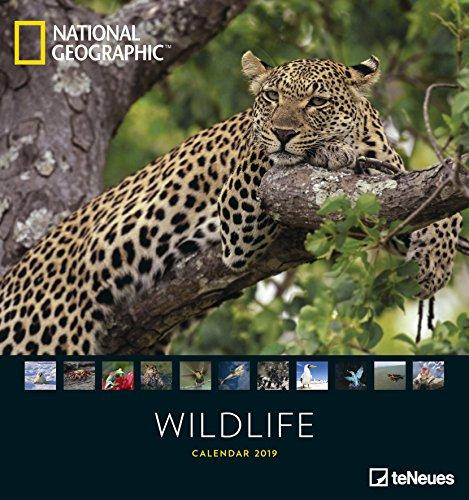 Wildlife 2019 - National Geographic Fotokalender, Naturkalender, Tierkalender - 45 x 48 cm