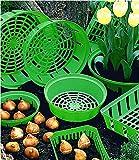 Blumenzwiebel Pflanzschalen rund, 3er-Set