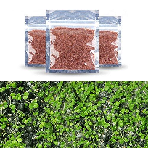 Handfly 3pcs Samen von Wasserpflanzen-Fischbehälter Zierpflanzen Samen Aussichten Mini Blatt, große Blattpflanzen Aquarium Landschaftsbau wahr lebenden Pflanzen