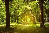 Infrarotheizung Bildheizung PREMIUM, rahmenlos mit Bild, 740 Watt, 90x60x1,5 cm, Motiv Waldlichtung