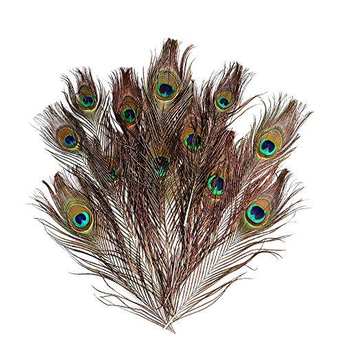 hönes natürliches Pfau Schwanz Eyes Feather Home Haare DIY Schmuck Hochzeit Dekoration 25,4-30,5cm ()