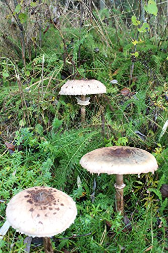 Bio Austernpilz Substrat Pilzbrut Pilze Selber Zuchten